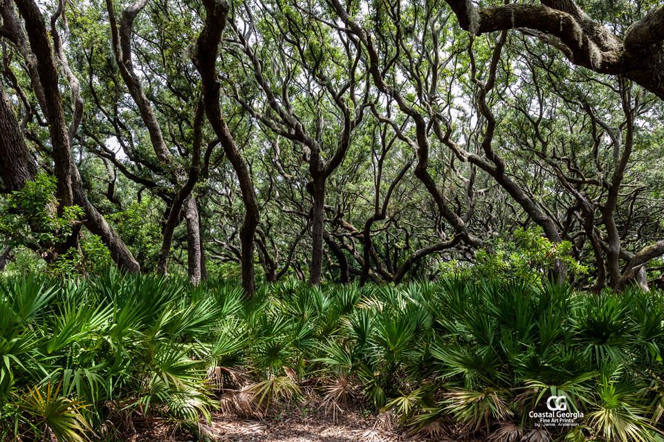 Cumberland Island Canopy