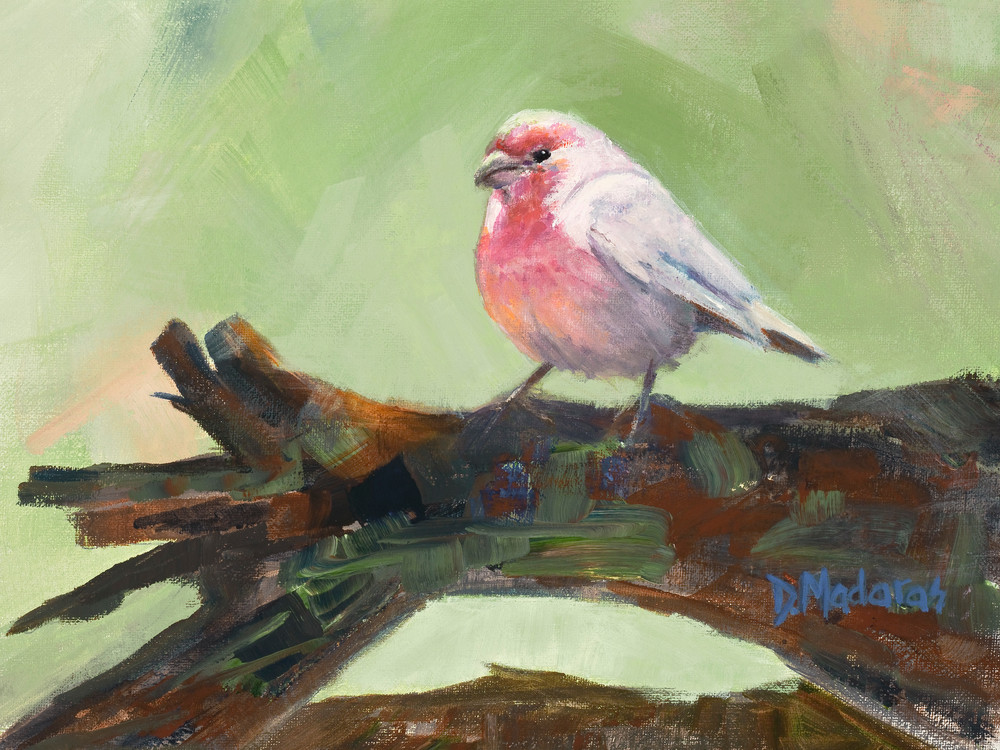 House Finch Painting Madaras