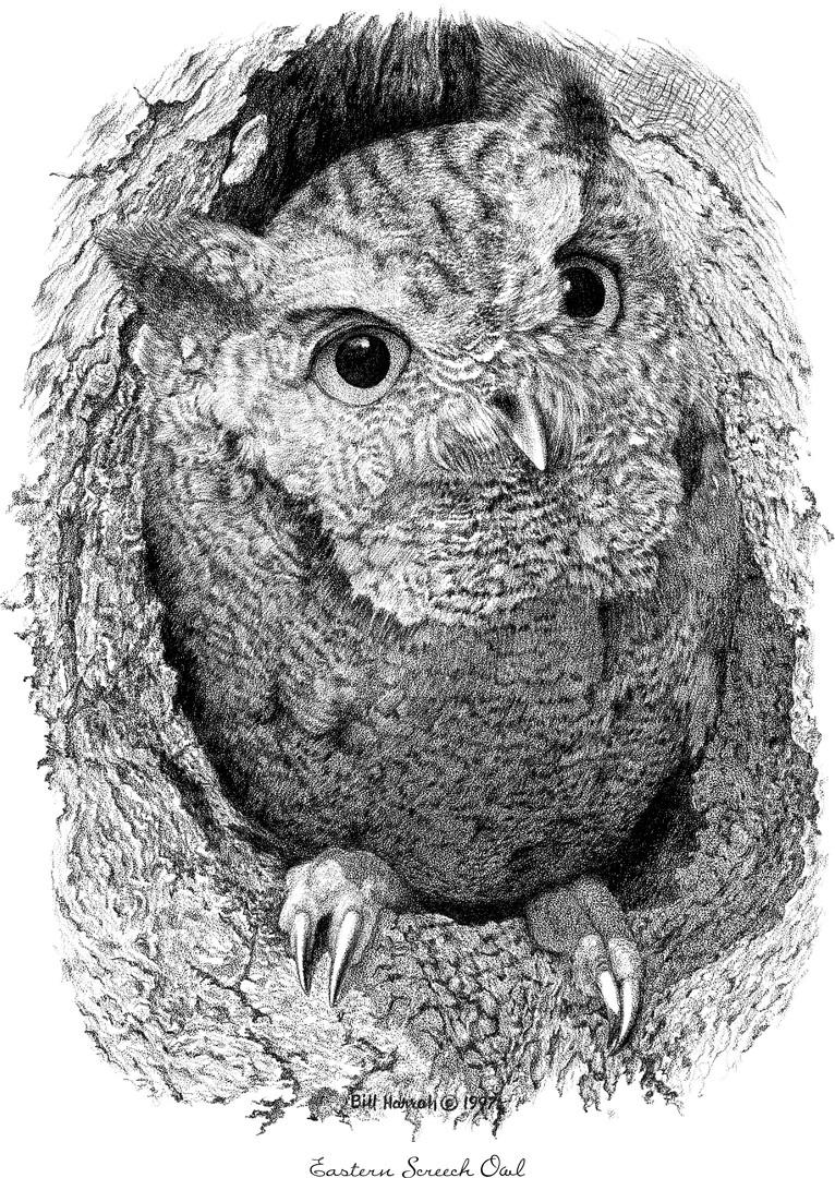 Bill Harrah Drawings