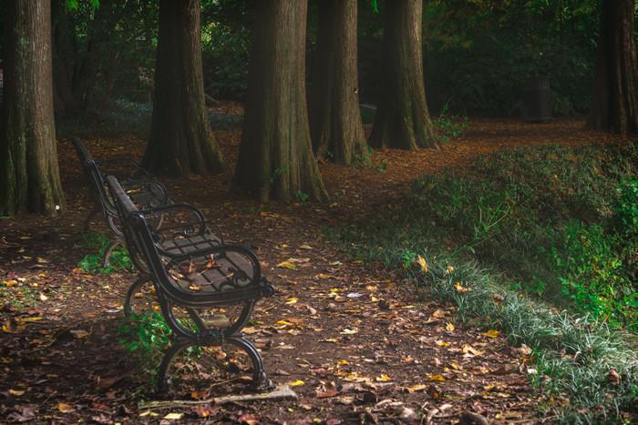 Park benches at Piedmont Park