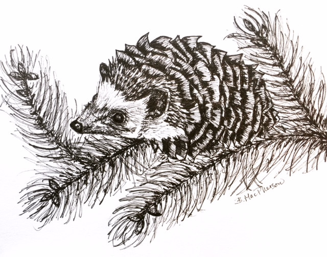 Hedgehog Pinecone Illustration by Becky MacPherson