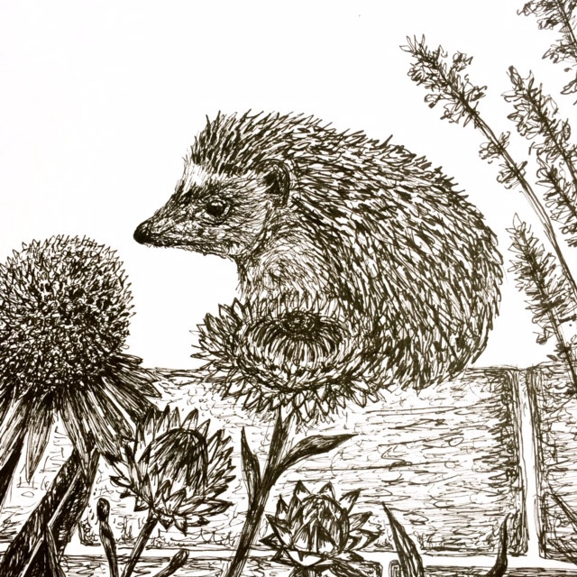 Prickle the Hedgehog Explores the Garden Illustration by Becky MacPherson