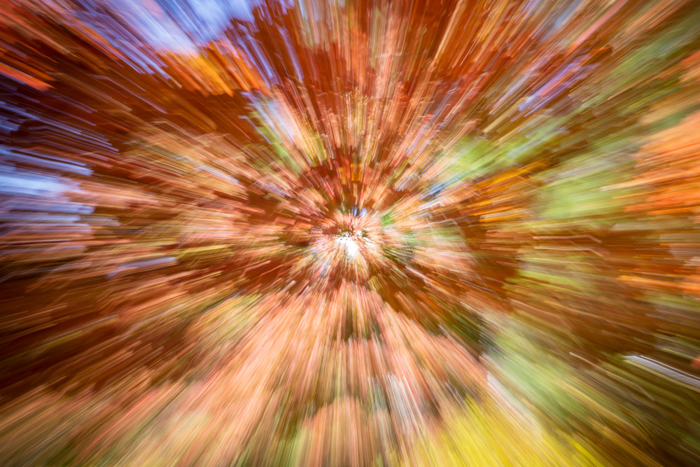 An abstract photo of a tree in Atlanta in the fall