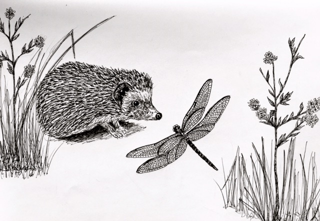 Prickle the Hedgehog Says Hello to a Dragonfly Original Illustration by Becky MacPherson