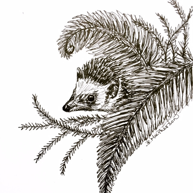 Prickle the Hedgehog in a Fern- Original Illustration by Becky MacPherson