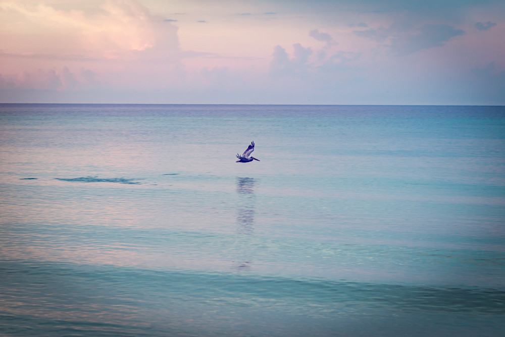 Pelican flying low over the ocean looking for food