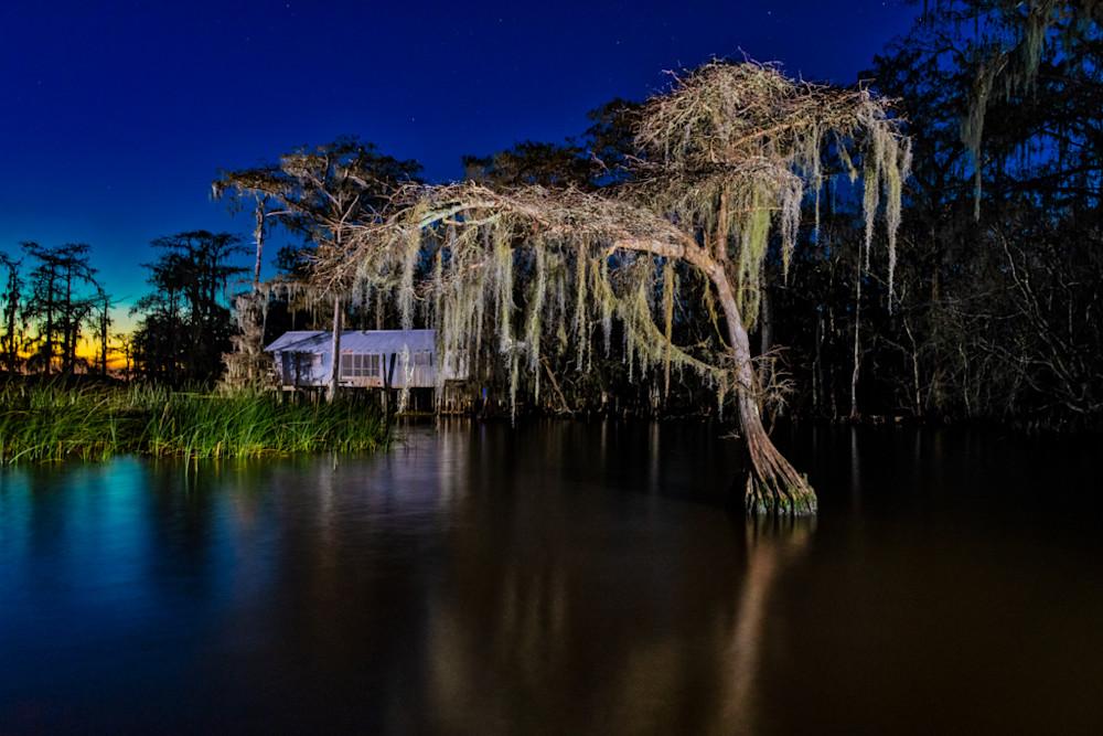 Amazing nighttime swamp photography