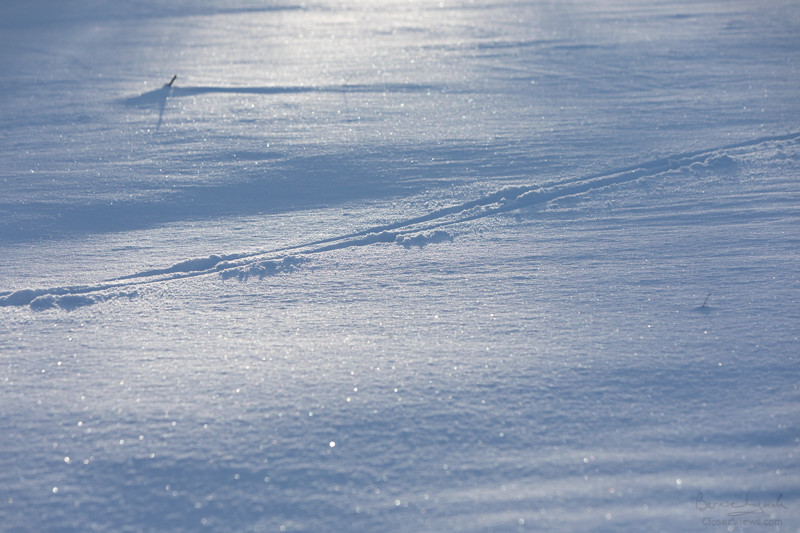Graceful tracks through cold snow