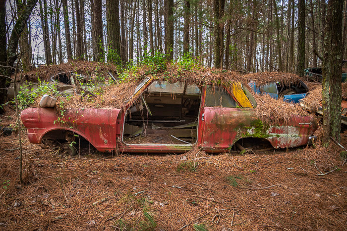 Old car in a junkyard, sunken into the earth with trees growing on the roof