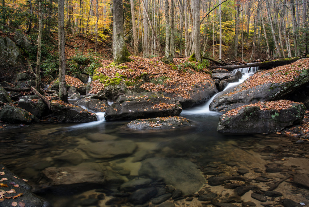 Laurel Creek in West Virginia's Holly River State Park contains many small waterfalls.