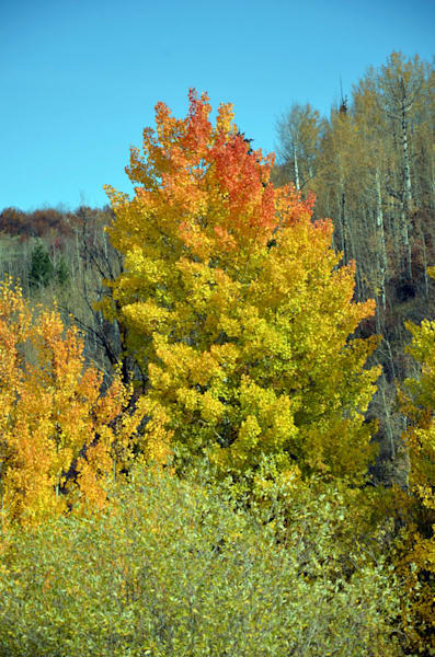 swan valley idaho fall colors