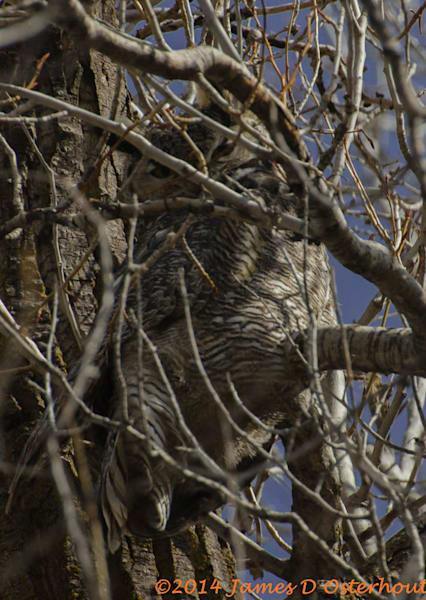Great Horn Owl Male5643 Ftw  Eeiqhc.Jpg Photography Art | Swan Valley Photo