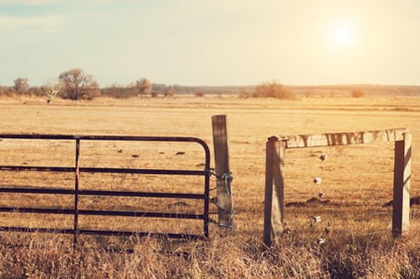 Open Ranch