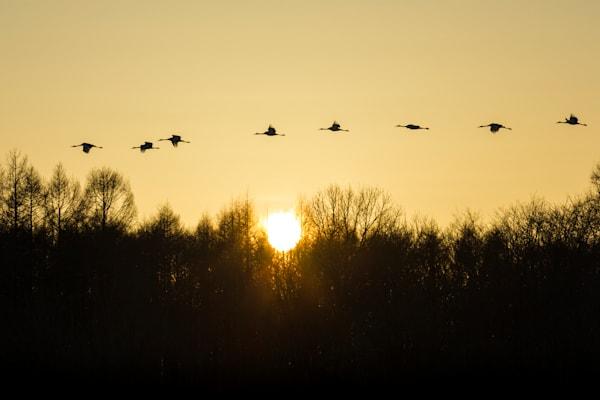Eight Cranes
