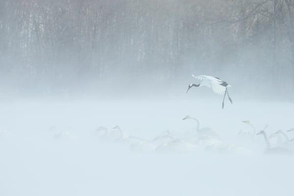 Crane Lands in Snow Storm