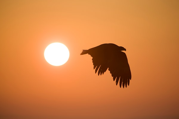 Eagle Sunrise
