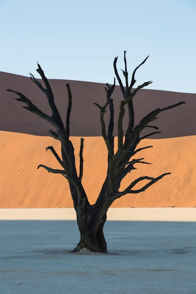 Deadvlei Tree