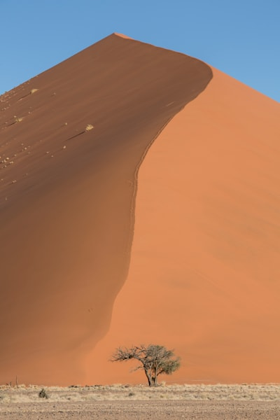 Afternoon Dune