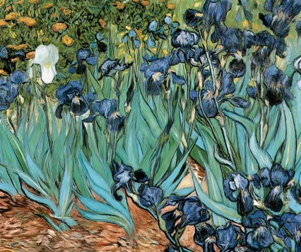 Vincent van Gogh's Irises - The Gallery Wrap Store