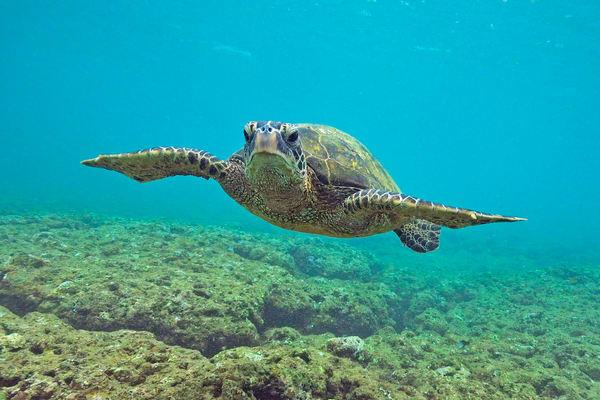 Kauai Marine Life