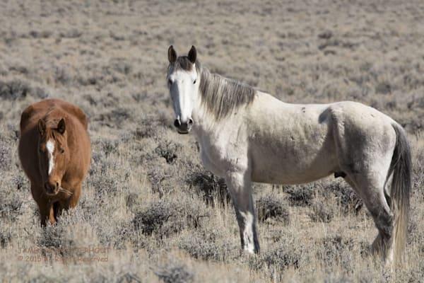 wild horses, mustang,wyoming,idaho
