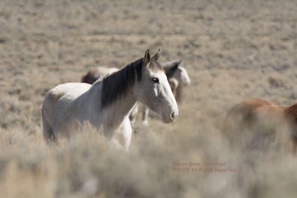 Image T4cdyj.Jpg Photography Art | Swan Valley Photo