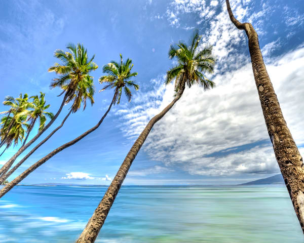 Hawaii Photography | Coconut Tree Twist by Randy J Braun