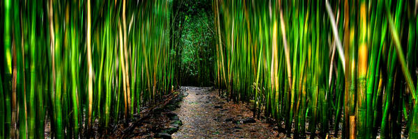 Hawaii Photography | Bamboo Dance by Randy J Braun