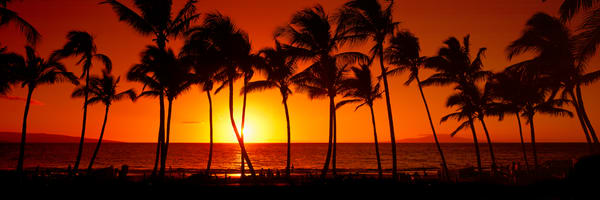 Hawaii Photography | Coconut Palms by Randy J Braun