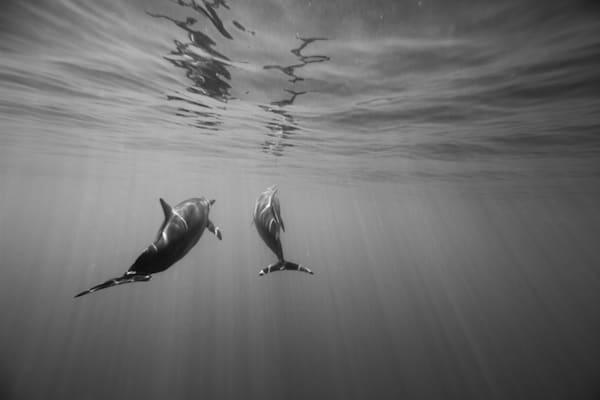 Surf Photography | Naia Life by Doug Falter