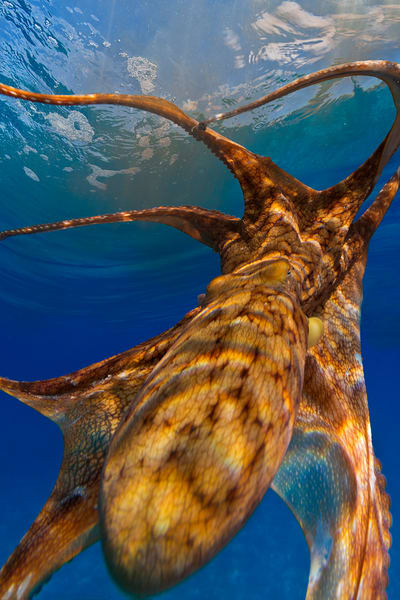 Underwater Photography | Up Close and Personal by Leighton Lum