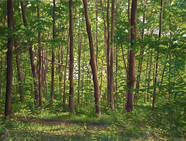 Sugar Maples,watercolor, landscape, watercolor landscape, Vermont, forest