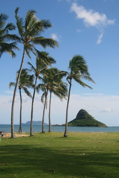 Landscape Photography | Palm Trees at Chinaman's Hat by Doreen Decasa