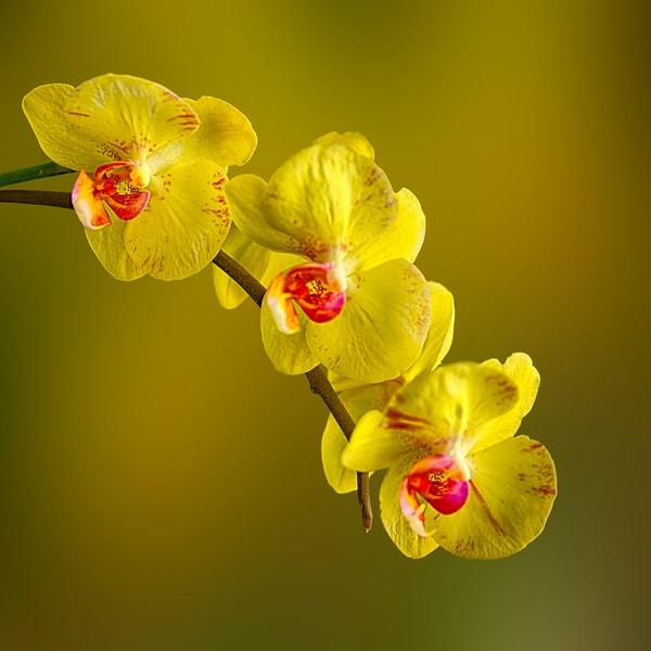 Flowers .td