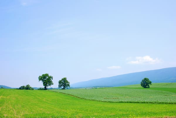 """""""Green Fields"""""""