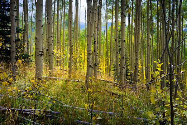 Autumn, Landscape, New Mexico, Photography, Santa Fe, Aspens