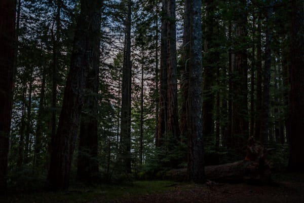 photography, nocturne, Marin County, Mt. Tamalpais, landscape, California, forest