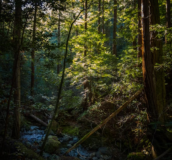 Landscape, Photography, California, Marin County, forest,