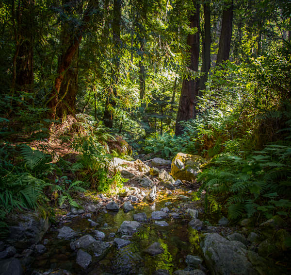 Landscape, Photography, Steep Ravine, California, Mt. Tamalpais, Marin County