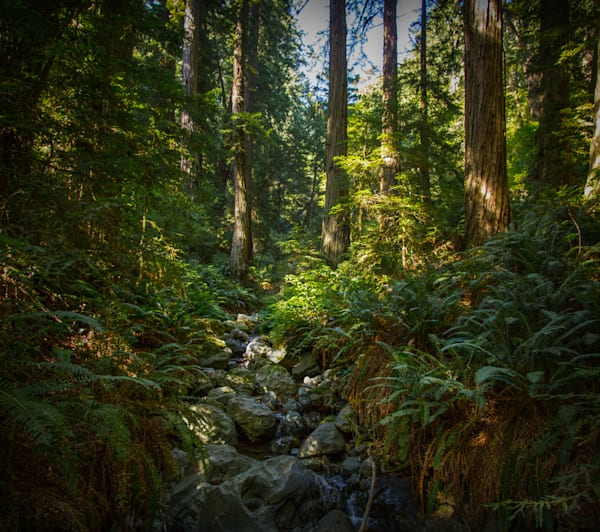 Landscape, Photography, California, Marin County, forest