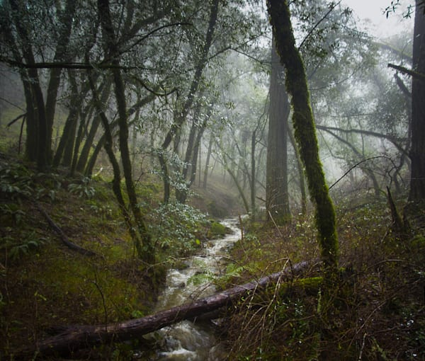 Landscape, Photography, Marin County, Mt. Tamalpais, California, forest