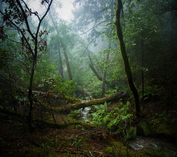 Landscape, Photography, California, Marin County, Mt. Tamalpais
