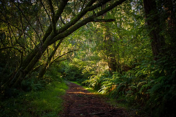 Landscape, Photography, California, Point Reyes, Forest