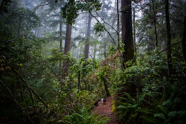 Cataract Trail, Landscape, Mt. Tam, Photography, California, Marin County, forest
