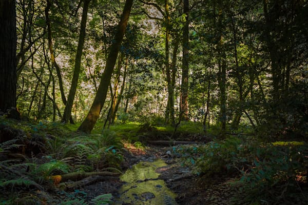 Landscape, Forest of Nisene Marks, Photography, California, forest