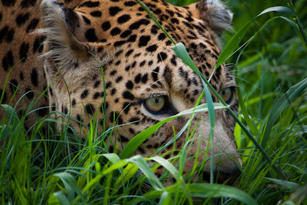 Africa, photography, leopard, South Africa, African Wildlife