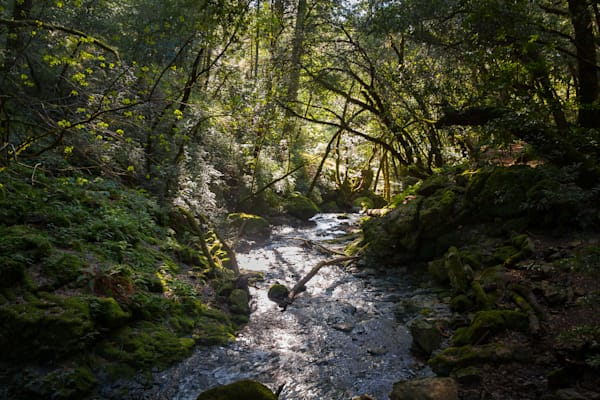 Landscape, Mt. Tamalpais, Photography, California, Marin County
