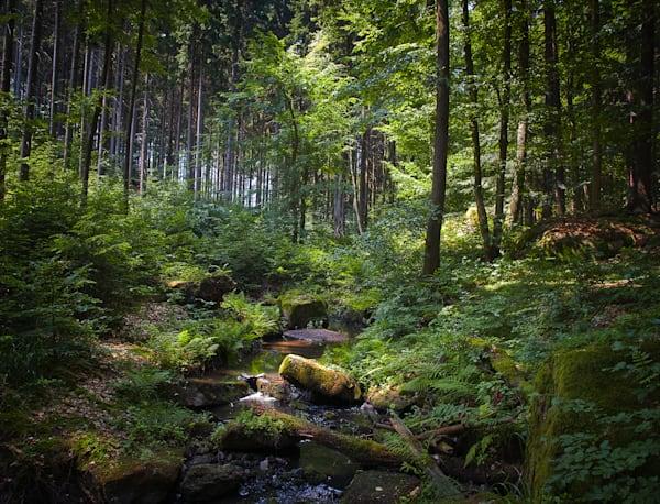 Czech Republic, Photography, landscape, forest