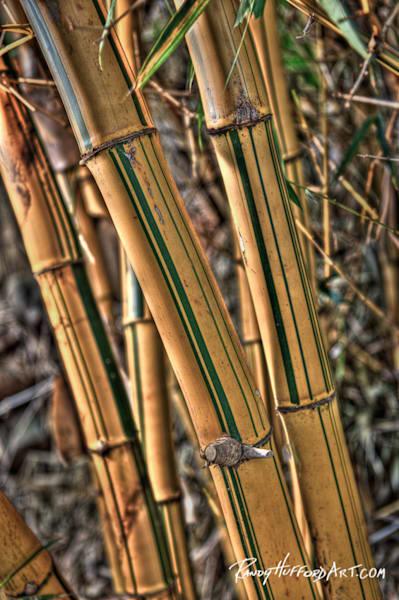 Bamboo Kane