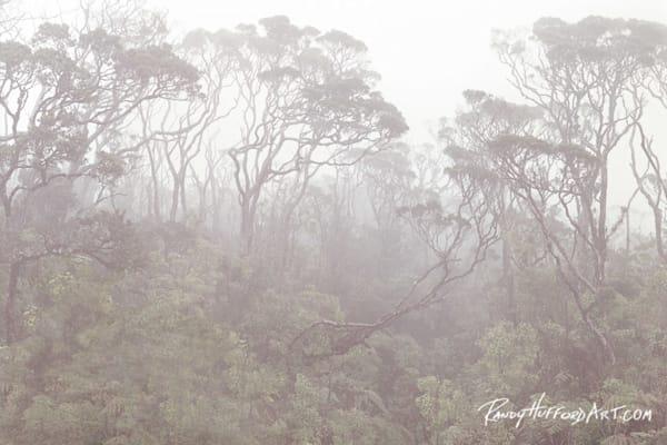 Oheo Rainforest